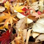 Worauf ich mich im Herbst freue + Lieblingssuppenrezept