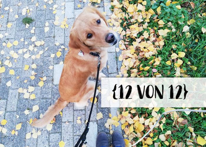 12 von 12 | klitzekleinedinge