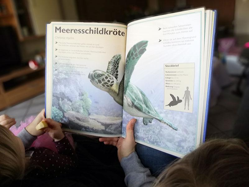Lieblingsdinge im Februar | klitzekleinedinge | Das Riesenbuch der Meerestiere